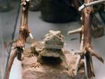 Frogger1