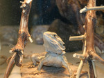 Frogger2