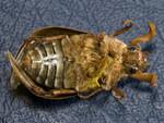 beetle-4