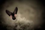 blackbird-08