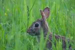 Highlight for Album: Finley Wildlife