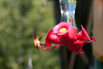 hummingbird-05