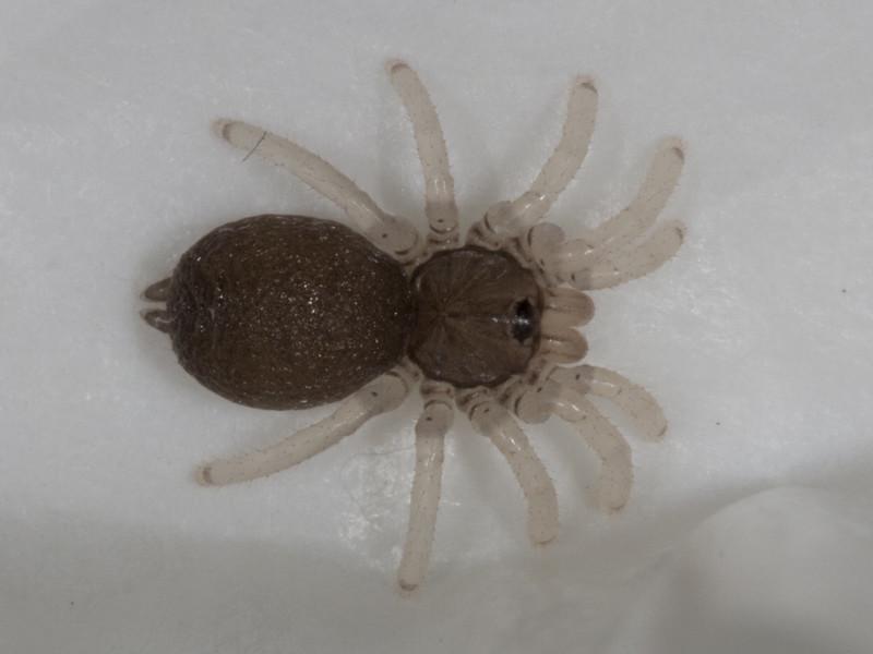 节肢动物 69 蜘蛛