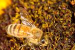 20100911bugs010