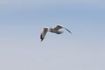 seagulls-10