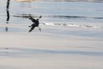 seagulls-12