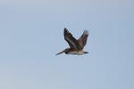 seagulls-15