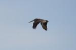 seagulls-16