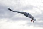 seagulls-27