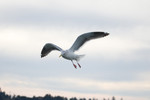 seagulls-28