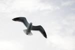 seagulls-29