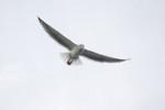 seagulls-31