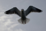 seagulls-32