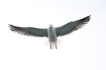 seagulls-33