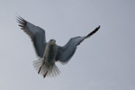 seagulls-35