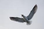 seagulls-45