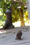 20100711bird005