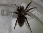 tub spider-2