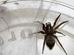 tub spider-3